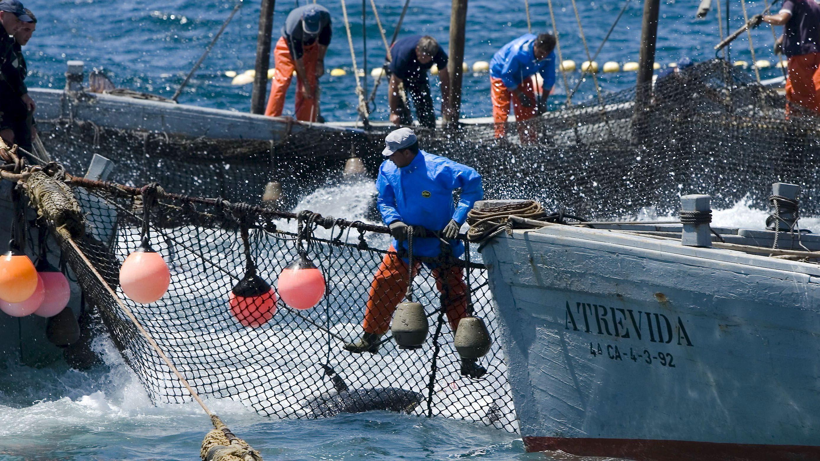 El Ronqueo del atún abre XVIII Encuentro Capitanes Almadraba de Isla Cristina