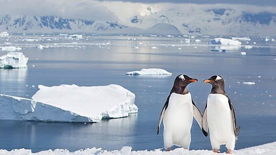 Antártico en juego: China amplía cooperación con Chile y Argentina