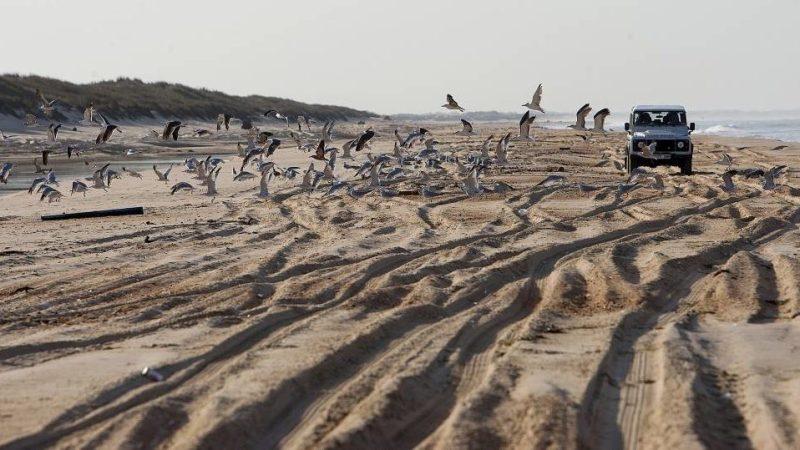 Ecologistas: El proyecto en Doñana es un atentado ecológico