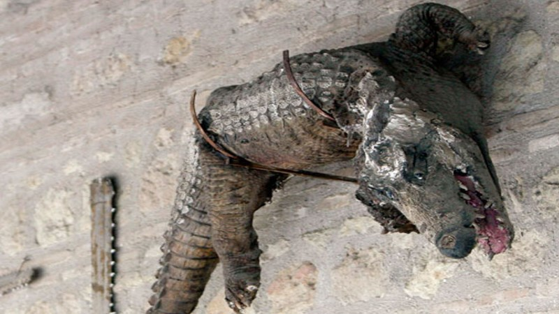 La leyenda del caimán de la Fuensanta en Córdoba