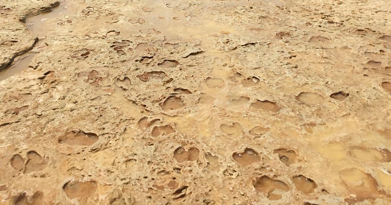 Descubren huellas fósiles con más de 100.000 años en Matalascañas, Huelva