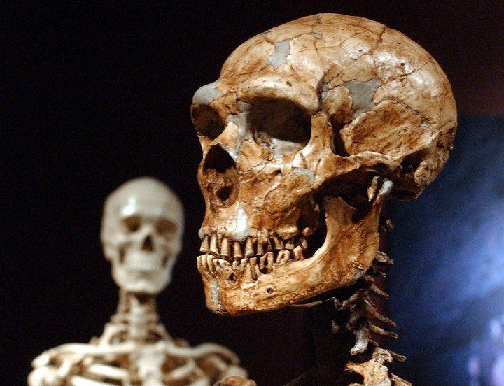 ¿Y si el ADN de los Neandertales de hace 60.000 años fuera la pista de la distinta respuesta orgánica frente al Covid-19?
