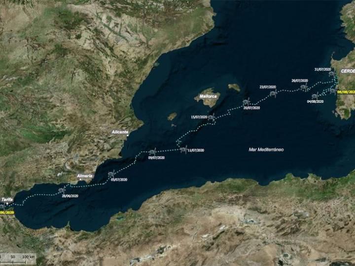 'Sparrow', la tortuga boba que cruzó el Mediterráneo tras surcar Almería, Murcia, Baleares y Cerdeña