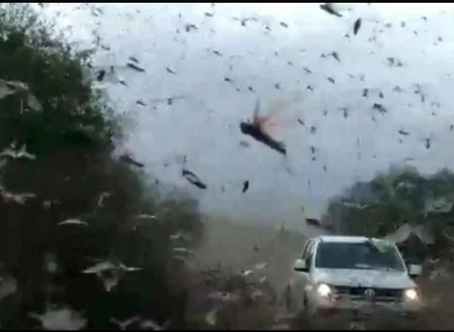 La Naturaleza de revela: millones de insectos invaden Siberia