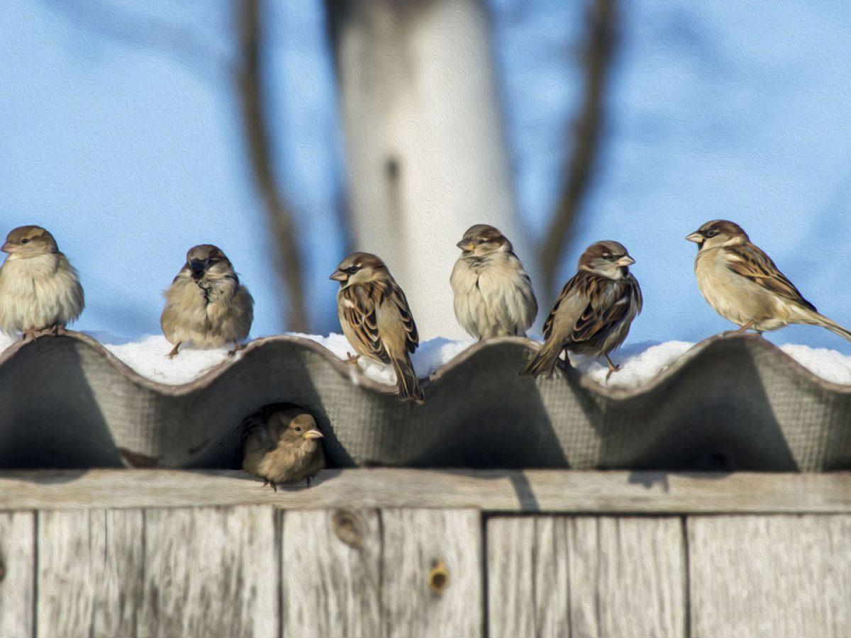Oiseaux Qui Nichent Sous Votre Toit Comment Les Eloigner