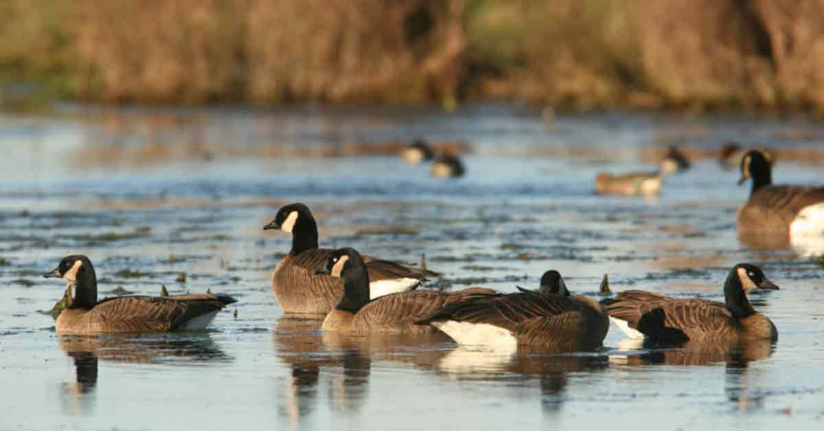 How To Hunt Ducks Float By Kayak