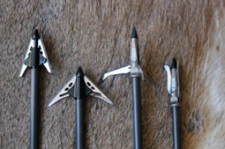 bear hunting broadhead
