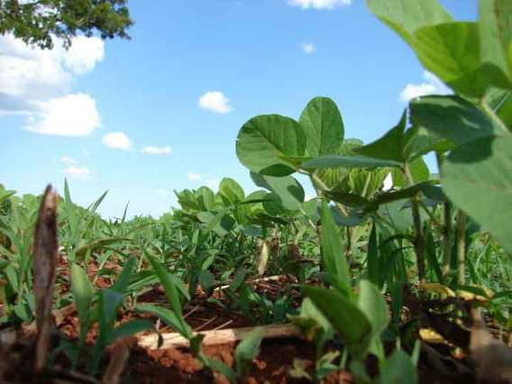 Facts about Soybean Food Plots