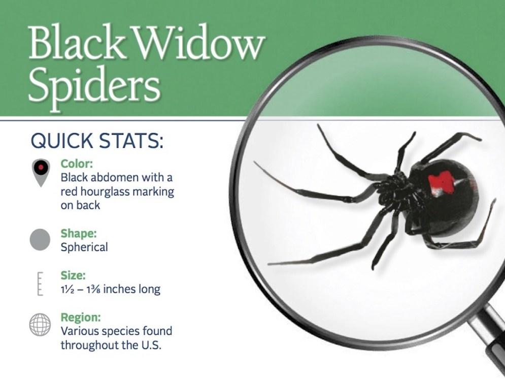 black-widow-spider-pest-id-card_front