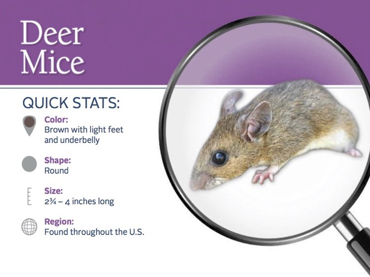 deer-mice-pest-id-card_front