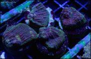 elite_reef_coral_DSC9949