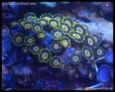 coral_denver_frag_dsc2404