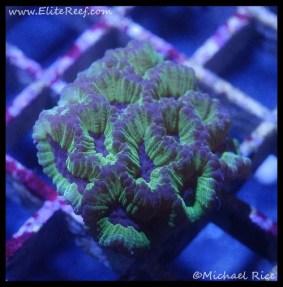 coral_denver_frag_dsc2421