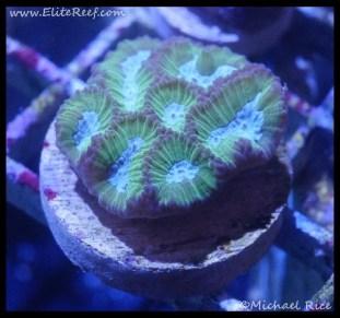 coral_denver_frag_dsc2424