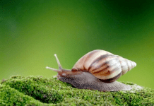18 Interesting Facts You Should Know About Snails