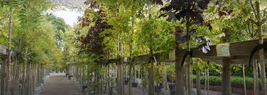 Elite Tree Care Services