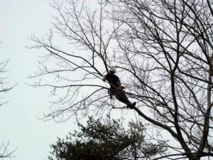 tree pruning seattle