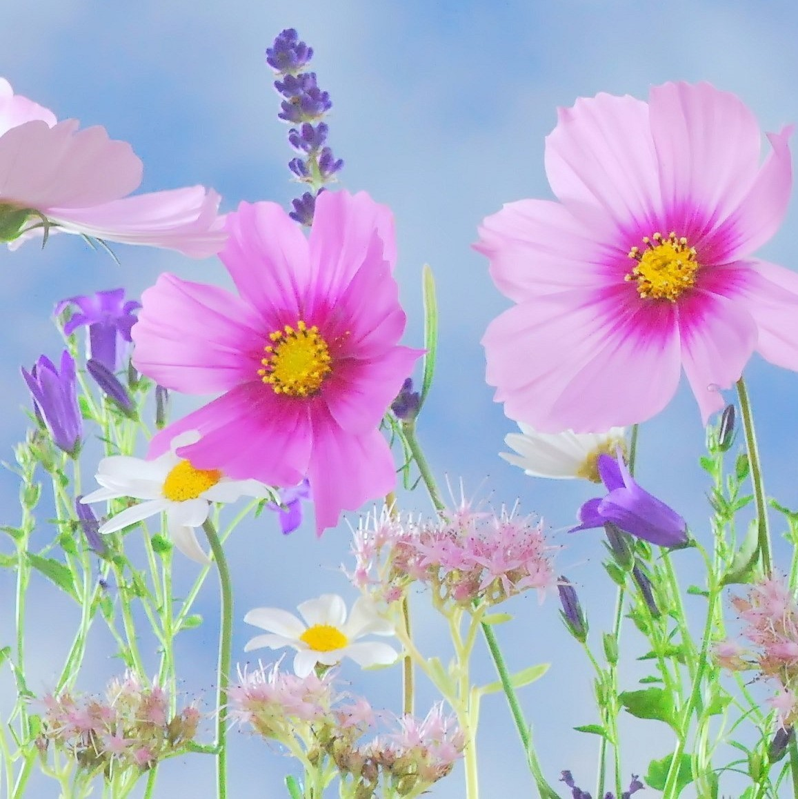 Inner-Garden-Party-Wildflowers-3