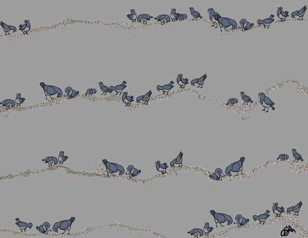 Pigeons AMY
