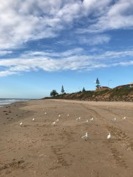 Seagulls on sentry duty