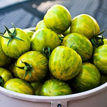 Green Zebra Tomatoes - we grew this variety at work one year, the only time I've had any hand in growing tomatoes