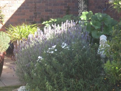 Lavender flowers in light and shadow