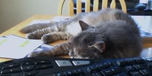 Kali and keyboard