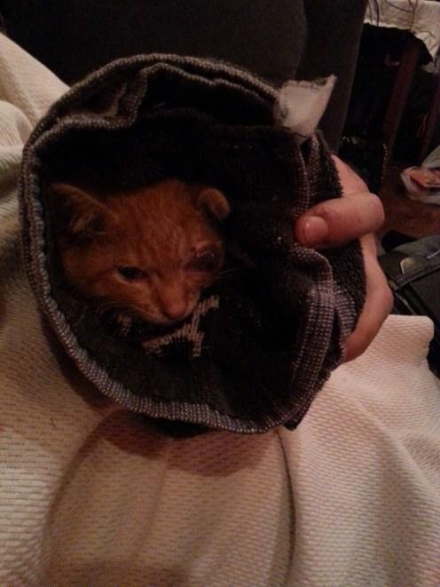 BooBoo Kitten in the Kitten Burrito, November 8, 2015