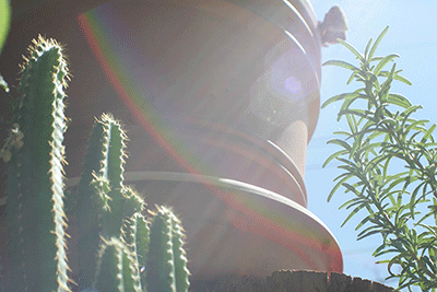 a rainbow with a terra cotta pot; succulents and cacti surround it.