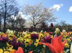 So many flowers!