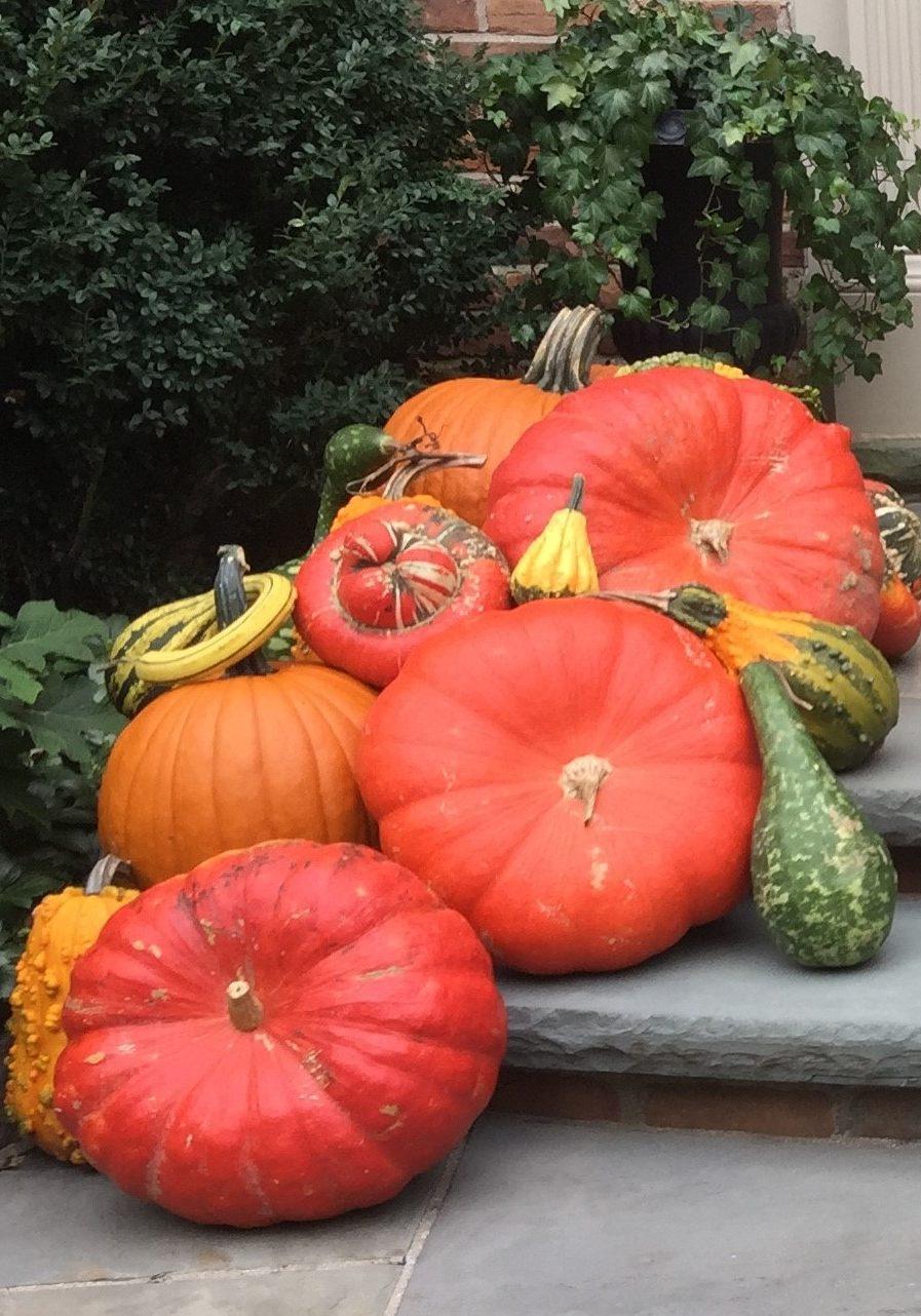 ElizabethGraceGardens.com Fall Pumpkins
