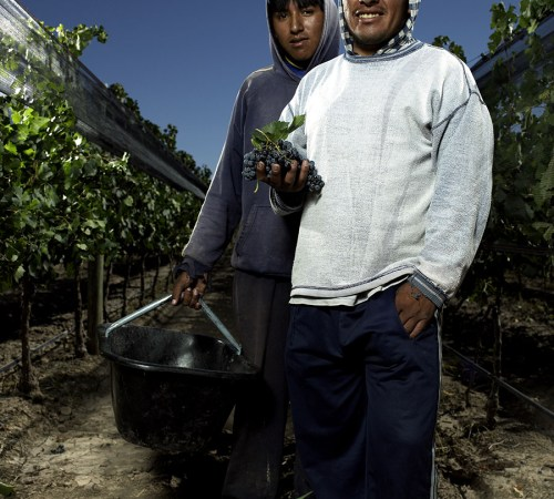 Vineyard workers in vineyard