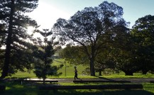At this time of day, the park is popular with walkers and joggers.