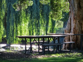 A picnic among the weeping willows.