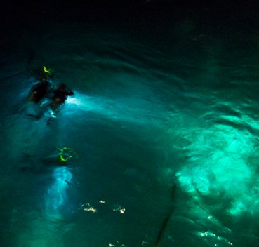 Divers at night, Great Barrier Reef