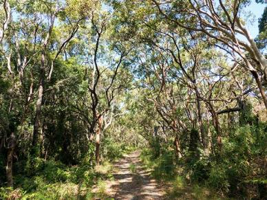 Walking through the bush, Cape Solander.