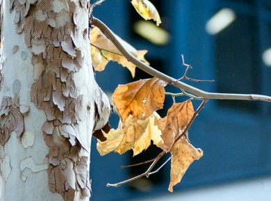 """The leaves they were crispèd and sere"""
