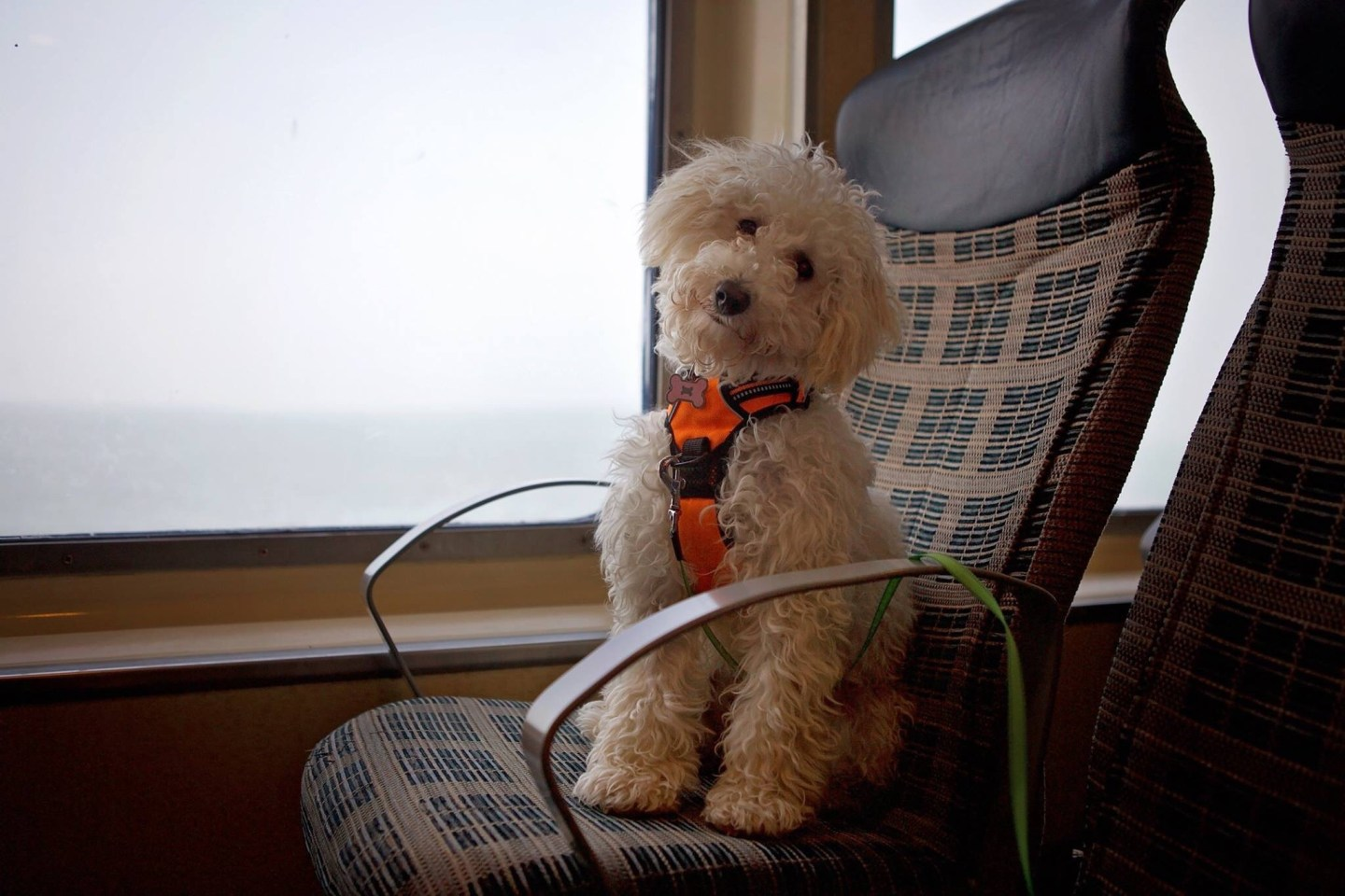 A doggy day trip with Wightlink *