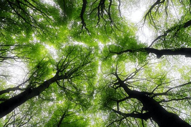 green-woodland