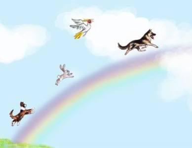 Heavenly Pets