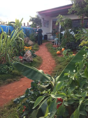 The Camfed Garden: giving girls in Africa a space to grow.