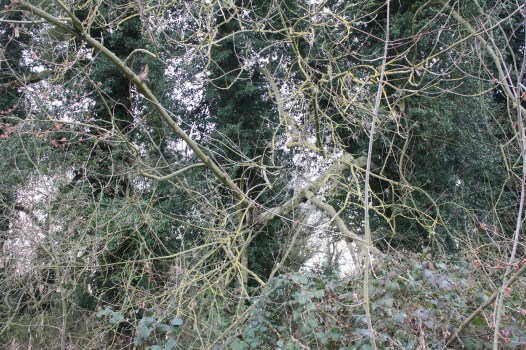 The spindly branches grow in all directions.