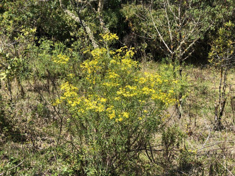 Flores  amarelas presente pela trilha