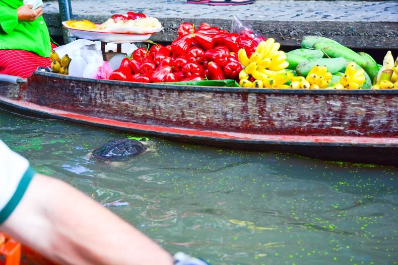 Detalhe de uma tartaruga no meio do mercado flutuante! Bangkok