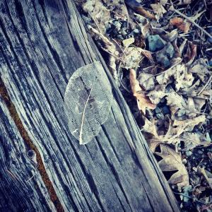 Leaf on railroad tie