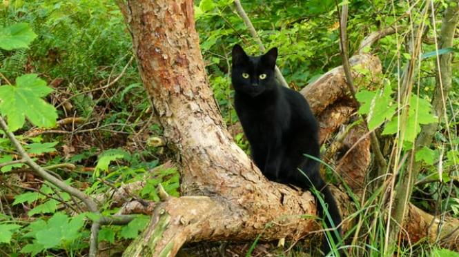 How to Survive Off-Grid- for Cats! A feline guide to travelling on a narrowboat.