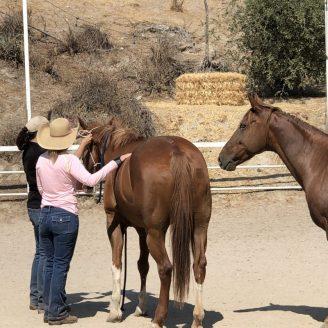 advanced-horse-academy-2021-2