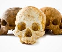 Best Halloween Treats - Chocolate Skull from Firebox