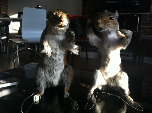 Taxidermy Squirrels