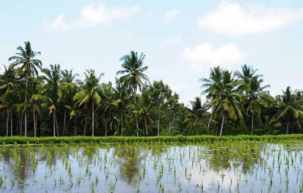 Spiritual Bali - rice paddies